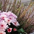 Chrysantheme & Sommerheide, harmonisch Ton in Ton