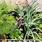 """""""Grow your own""""  mit Salat- & Gemüsesetzlingen"""