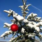 Weihnachtsbäume frisch geschlagen aus dem Ländle