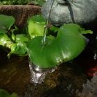 Schwimmpflanzen