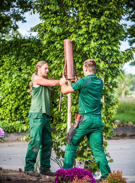 Gärtner  Ausbildung zum Gärtner - Baumschule Erhardt
