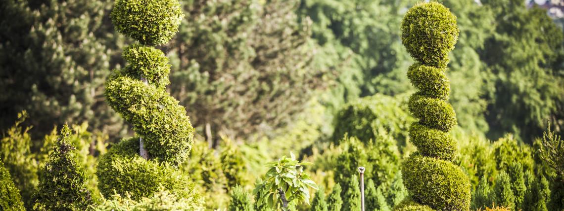 Gartenpflanzen - Baumschule Erhardt